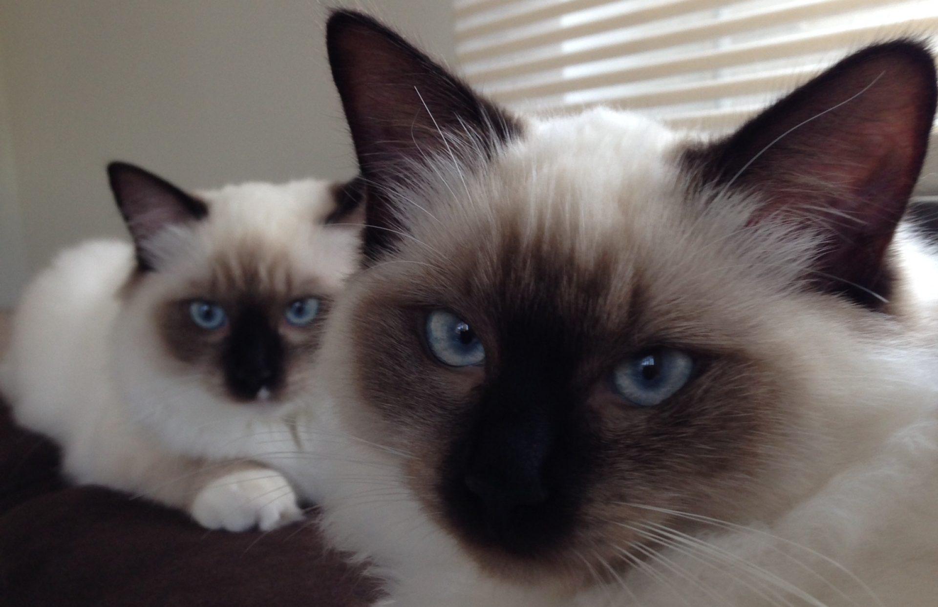 Kattenkapster
